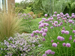 The Herb Garden - Thyme and Chives
